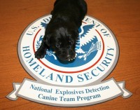 TSA Dogs Sniff Out Drugs & Ham Sandwiches