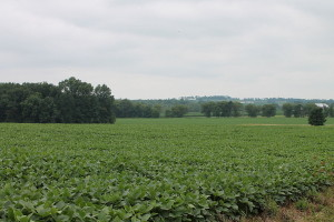Soybean_field_in_Anthony_Township,_Montour_County,_Pennsylvania